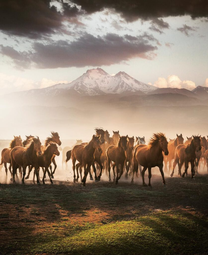 chevaux_cappadoce